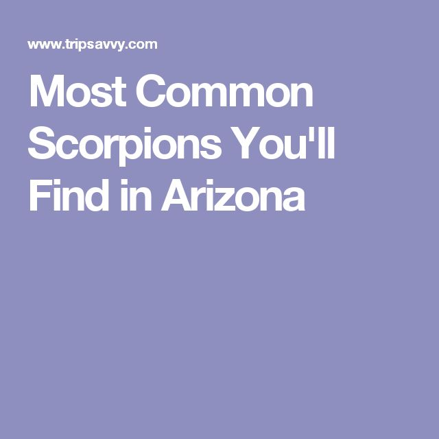 Most Common Scorpions You'll Find in Arizona