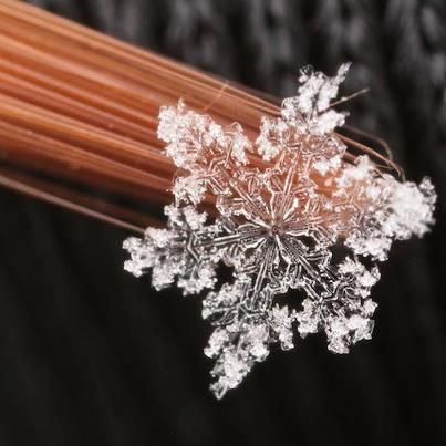 17 best ideas about real snowflakes on pinterest