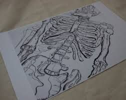 Contour Line Drawing Leonardo Da Vinci : Best leonardo da vinci inspired art work images