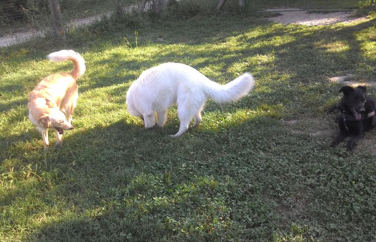 06/09/2016 - Torino con Sally e Peja