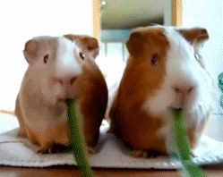 Najsłodsze JEDZĄCE zwierzęta świata - OMNOMNOM!