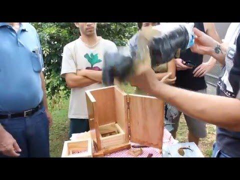 Transferência de abelha Jatai para caixa - YouTube