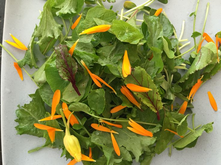 4.  Add #flower petals and other greens like #beetroot #greens.