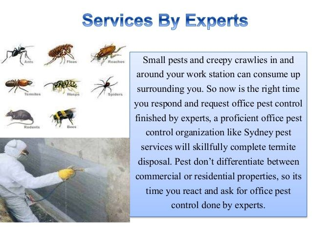 Pest control administration suppliers think about three things, size of the property, level of infestation and length of time of protection. http://www.sydneypestservices.com.au/