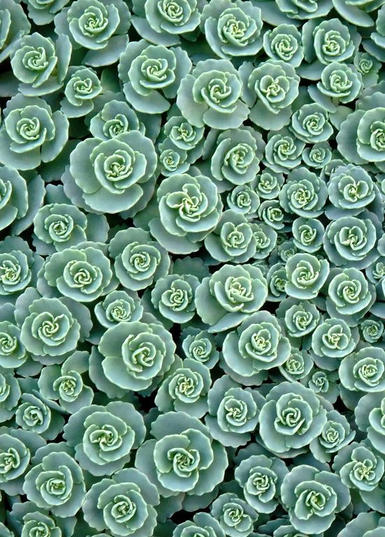 succulents. would be cool to do a vertical planter like this as wall art.
