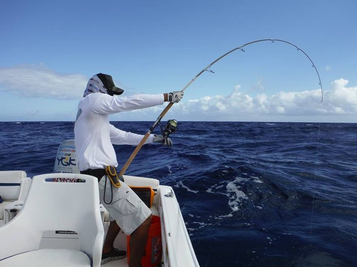 Nice bend on a Maven Pacific Stickbait rod. GT Fight Club, Hawaii.