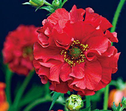 24 Spectacular Shade Garden Perennials – Finding S…