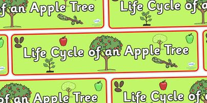 Twinkl Resources >> Apple Tree Life Cycle Display Banner >> Classroom printables for Pre-School, Kindergarten, Primary School and beyond! apple tree banner, life cycle of an apple tree banner, display, banner, display banner, apple tree life cycle banner,