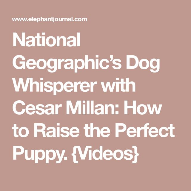 National Geographic's Dog Whisperer with Cesar Millan: How to Raise the Perfect Puppy. {Videos}