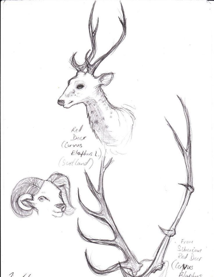 How Draw Deer Antlers