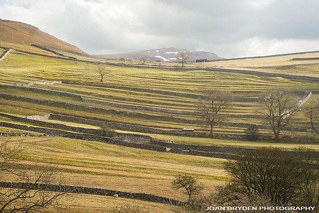 Medieval Field Systems, Malham, Yorkshire Dales, North Yorkshire, England