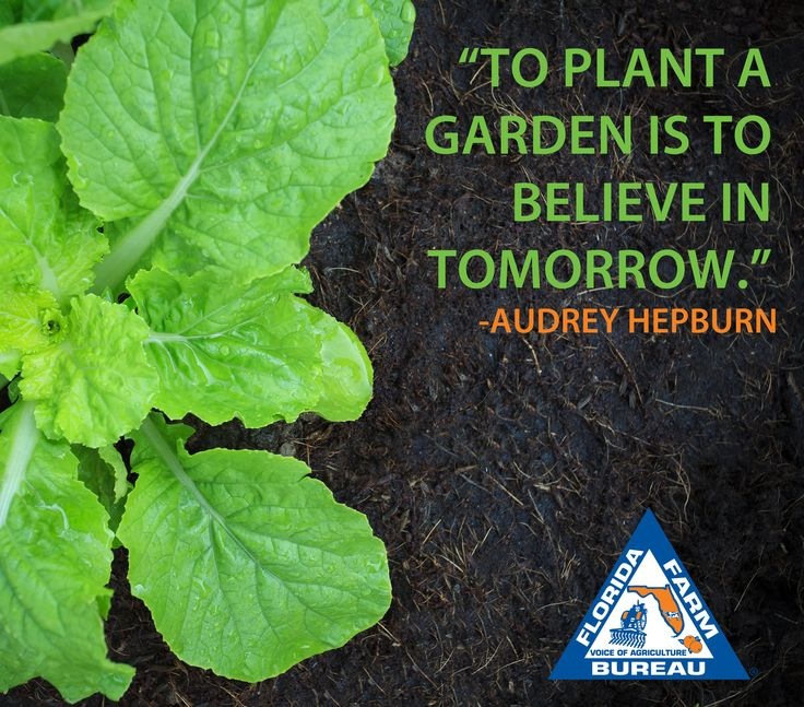 105 Best Farm Wisdom Images On Pinterest Agriculture Agriculture Quotes And Farmer Quotes