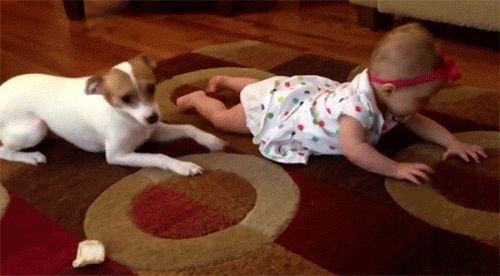 <b>This is why everyone should be a dog person.</b>