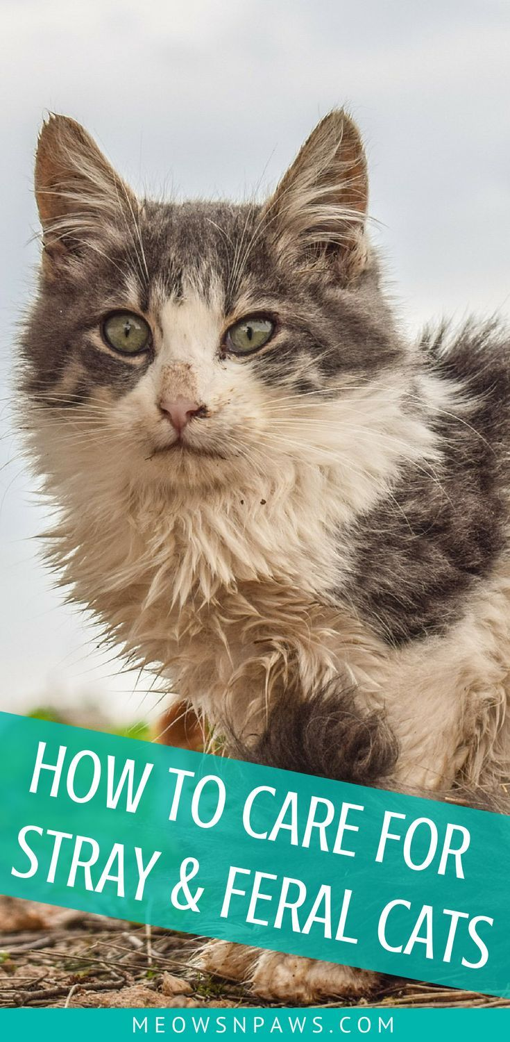 How To Care For Stray And Feral Cats 6 Things To Know Meows N Paws Feral Cats Cats Cat Care