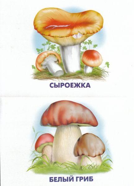 Конспект занятия-викторины «грибная викторина» класс.