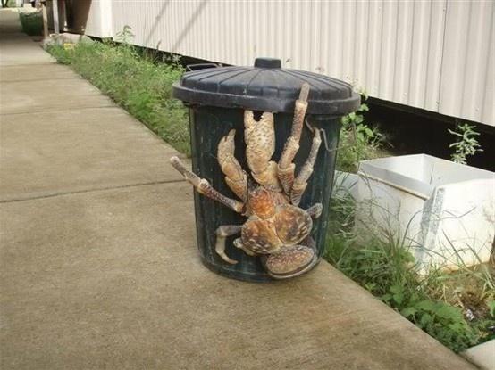 I may never go near a garbage can again!  Australian Tasmanian Spider.