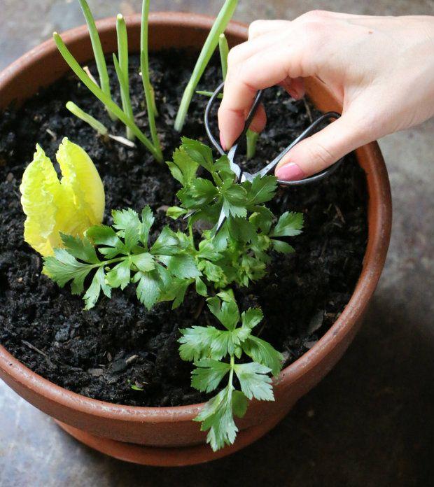 Essbare Küche Pflanzer Garten