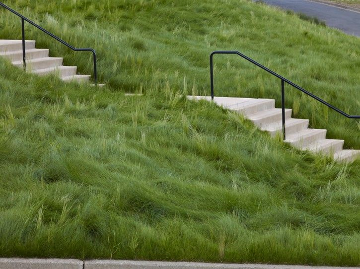 30 best grasses for lawns images on pinterest gardens ophiopogon japonicus and decorative - Drought tolerant grass varieties ...