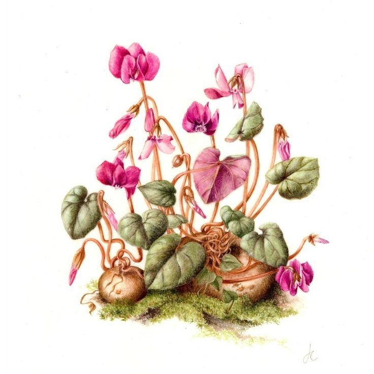 Bedgebury Pinetum Florilegium Society - Jackie Copeman