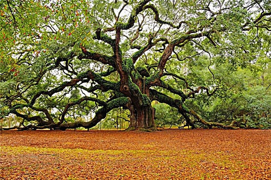 middle eastern singles in shrub oak Discussion forums trees and forest of the middle east  the rugged landscape is dappled with brilliant yellow patches of turkey oak trees in the fall.