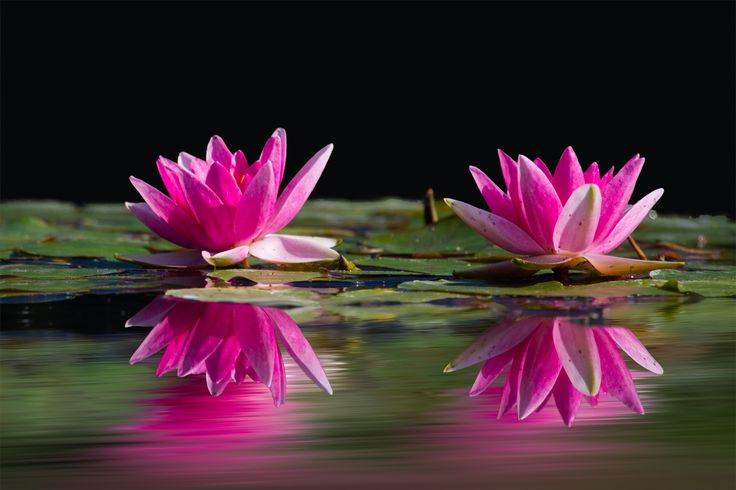 Missing childhood memories to give up water lilies #gardening #garden #DIY #home #flowers #roses #nature #landscaping #horticulture