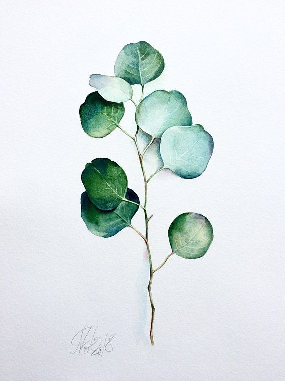 Original Watercolor Silver Dollar Eucalyptus Painting Green Leaf