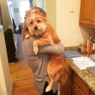 This chill dude who's just hanging around.   19 Adorable Mutts Who Are Clearly Mankind's Best Friends