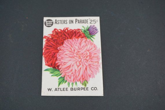 Seed Package, Burpee Seeds, W. Atlee Burpee Co., Asters on Parade, Vintage 1950's Seedsman,  Vintage Garden, Greenhouse, Free 1st Class Ship