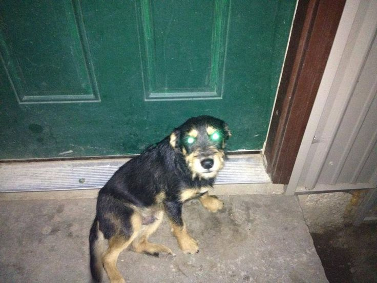 7/14/14 Found dog alert in Exeter, MO in Barry county
