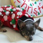 Ugly Christmas Sweater for Dogs tutorial with a Christmas Candy Land theme. Perfect for those ugly Christmas sweater parties this holiday season!