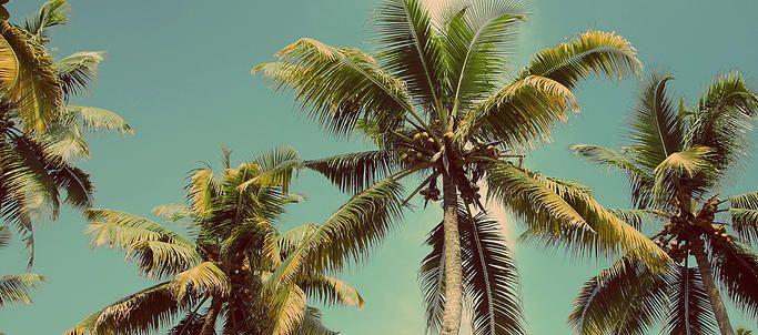 CHICLE, LEGADO MAYA EN EL PARAISO DE SIAN KAAN Adéntrate en la selva y visita un campamento chiclero, descubre una de las formas de vida de la Cultura Maya, conoce el proceso de elaboración del chicle, un legado de nuestros antepasados, enamórate del color turquesa de las lagunas de Sian ka´an, salta en el canal de agua dulce rodeado por manglares. Una experiencia relajante en contacto con la naturaleza. Incluye: Transportación durante las visitas desde Tulum. 2 noches de hospedaje en Tulum…
