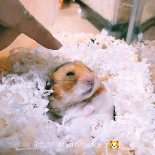 How to play with your hamster 🐹