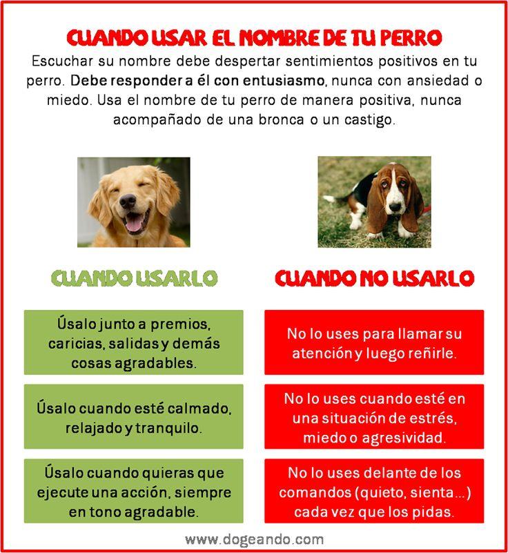 Tips para el nombre de tu perro