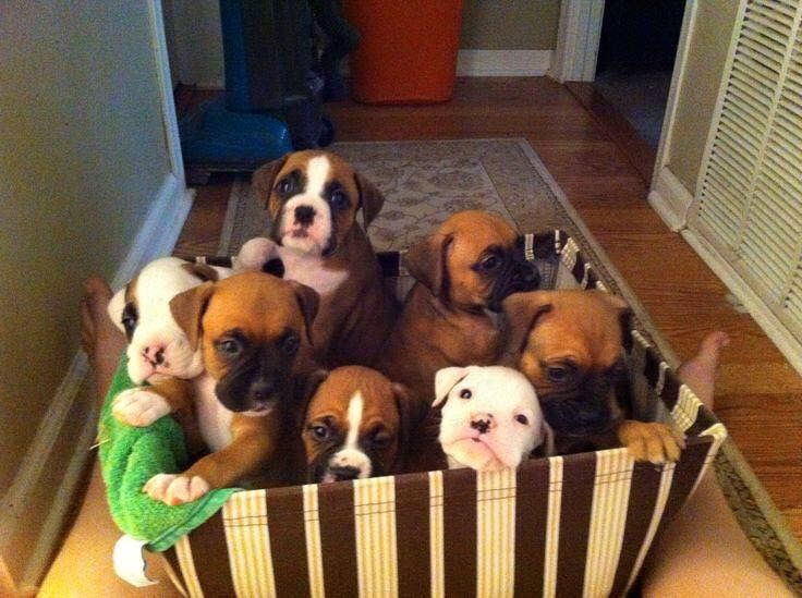 Oh my goodness!!!! I want all of them