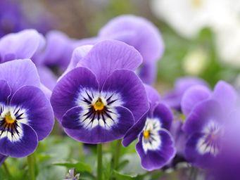 Ganz schön lecker: essbare Blüten   eatsmarter.de