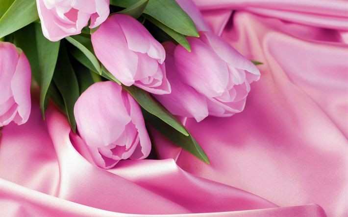Download wallpapers pink tulips, romantic bouquet, tulips, pink silk, pink flowers