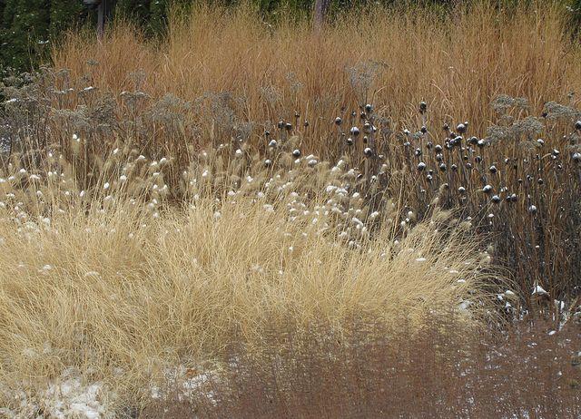 72 best plants autumn winter images on pinterest for Landscapes in landscapes piet oudolf