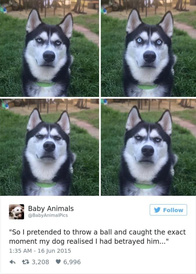 The 25 Best Posts About Huskies On The Internet Dog Quotes Funny