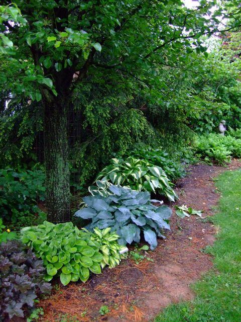 hostas hosta gardensmodern garden designmodern