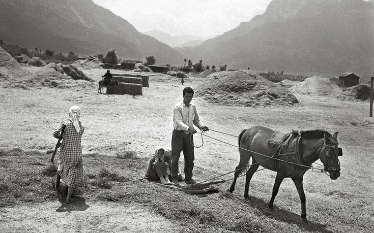 Αλώνισμα. Φωτογραφία του Τάκη Τλούπα, ο οποίος είχε συνοδεύσει το 1952 τον Παύλο Κοντέλλη στην ελληνική ύπαιθρο για να απαθανατίσει τις παραδοσιακές αγροτικές εργασίες.