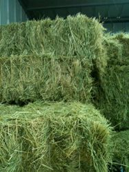 How is your hay quality?  Tips for inspecting hay before you accept a shipment! visit proequinegrooms.com