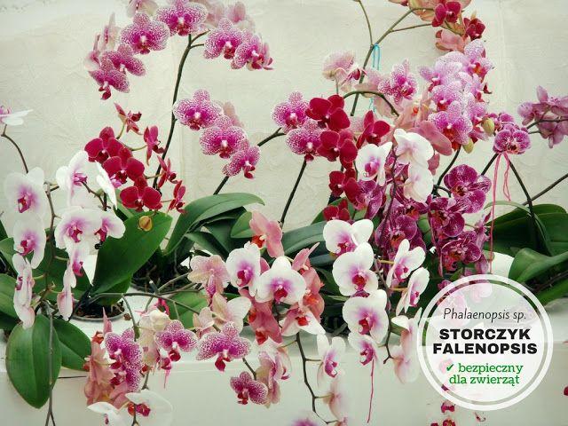 Rosliny Doniczkowe Bezpieczne Dla Psa I Kota Floral Orchids Floral Wreath