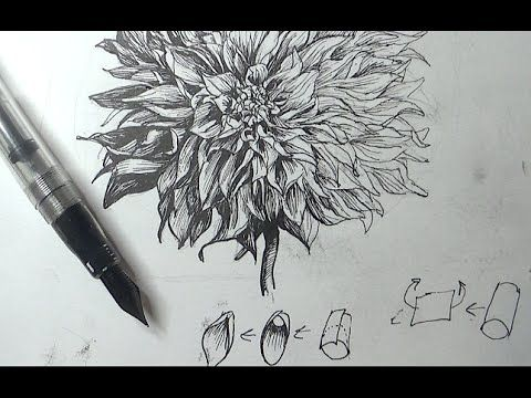 103 best art pen ink images on pinterest painting tutorials how to draw a flower with a flex nib fountain pen as a part of how to draw flowers landscape and scenery i used noodlers ahab fountain pen in this ccuart Images