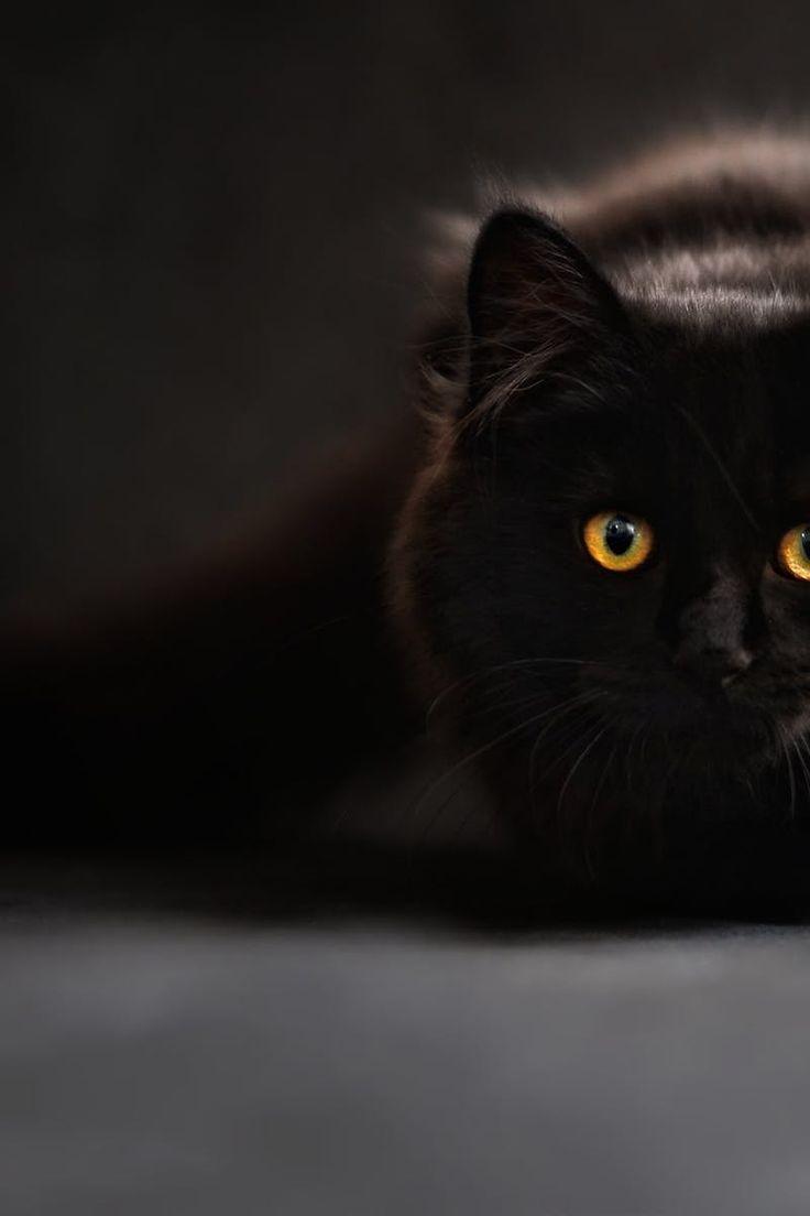 Brown and Black Cat