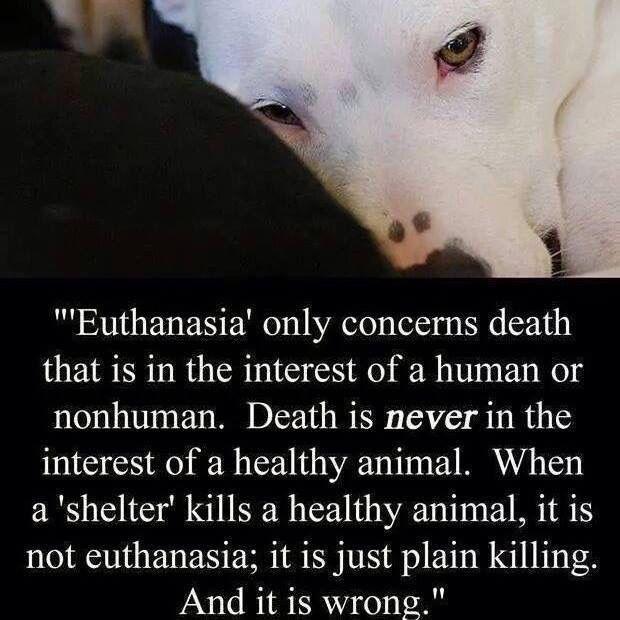 Best 25 animal euthanasia ideas on pinterest rainbow careers animal euthanasia solutioingenieria Choice Image