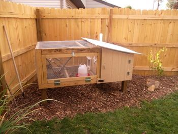 Beautiful backyard quail coop!