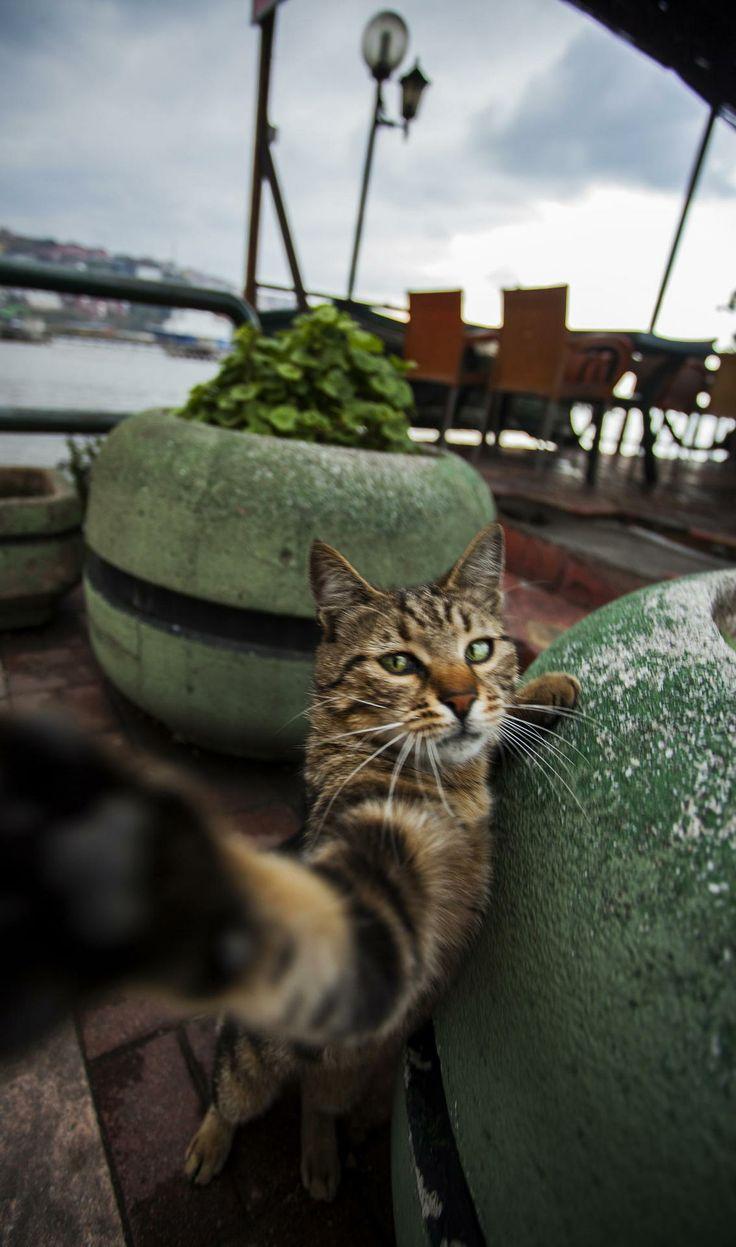 selfie(ᵔᴥᵔ)