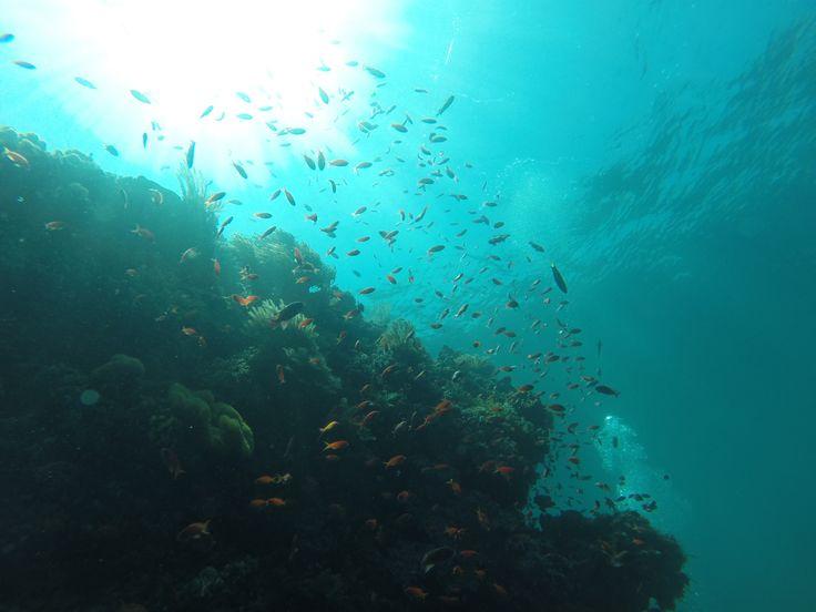 K41 Colorful Dive Spot