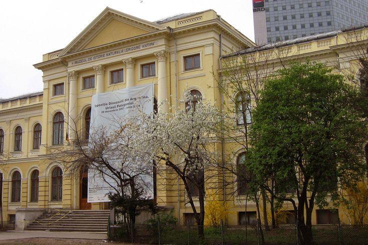 Grigore Antipa National Museum of Natural History, Bucharest