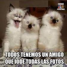 Resultado de imagen para gatitos y perritos graciosos con frases